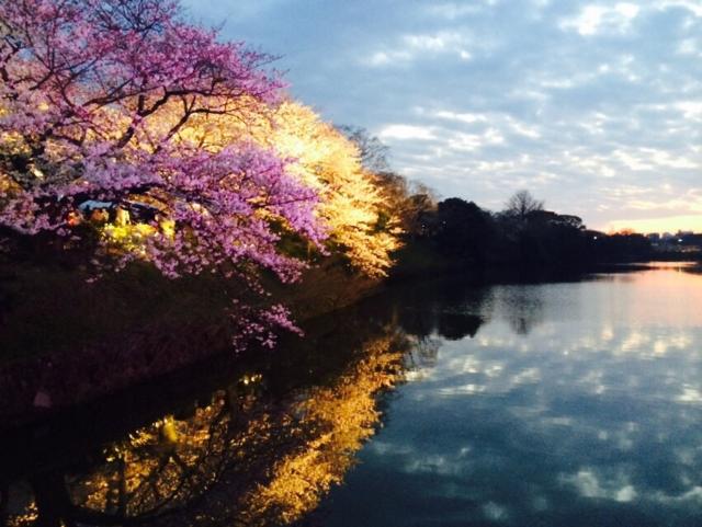 福岡城桜まつり⑤.png