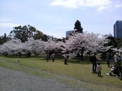 浜離宮:桜並木3.jpgのサムネール画像