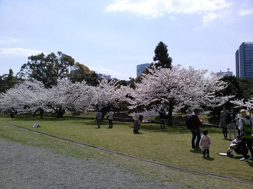 桜-中の御門前.jpg