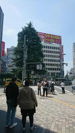 大きい木 前.JPG