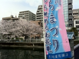 大横川桜満開20162.jpg
