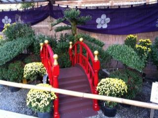 亀戸天神社菊まつり菊3.jpg
