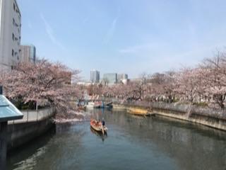 大横川の桜20171.jpg