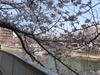 大横川の桜20172.jpg
