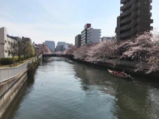 大横川の桜20174.jpg