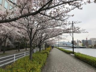 隅田川の桜20174.jpg