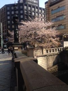 sakuranihonbashi150408jpg.jpg