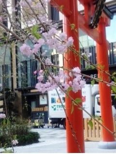 shidarezakura1 150410.jpg