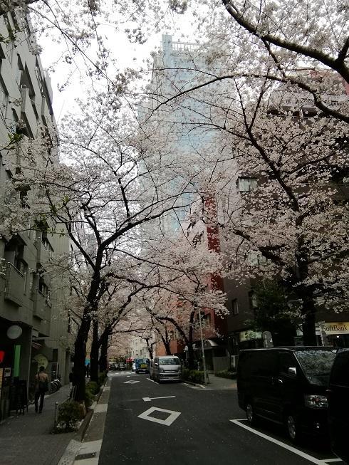 五反田駅周辺の桜.jpg