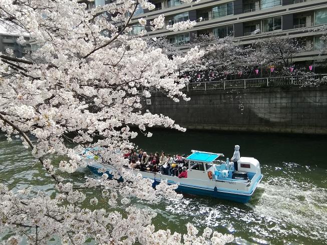 目黒川の桜2.jpg