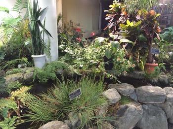 植物センター池②.jpg