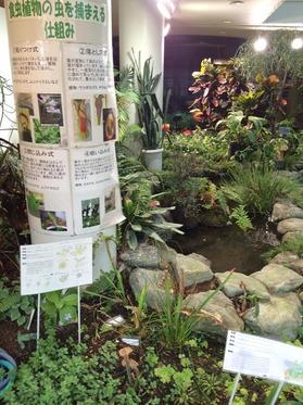 植物センター池.jpg