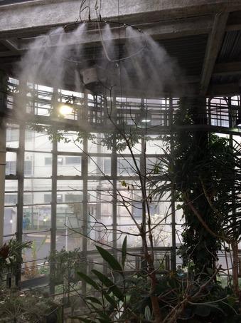 植物センター霧.jpg