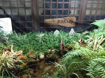 植物センター1階ホタル.jpg
