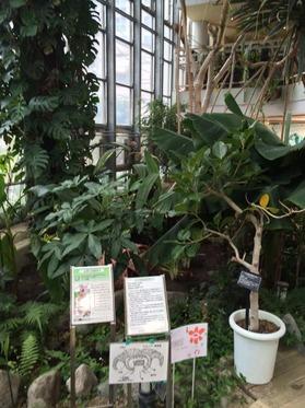 植物センター1階植物.jpg