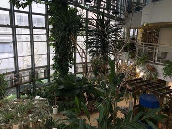 植物センター2階より1階の風景.jpg
