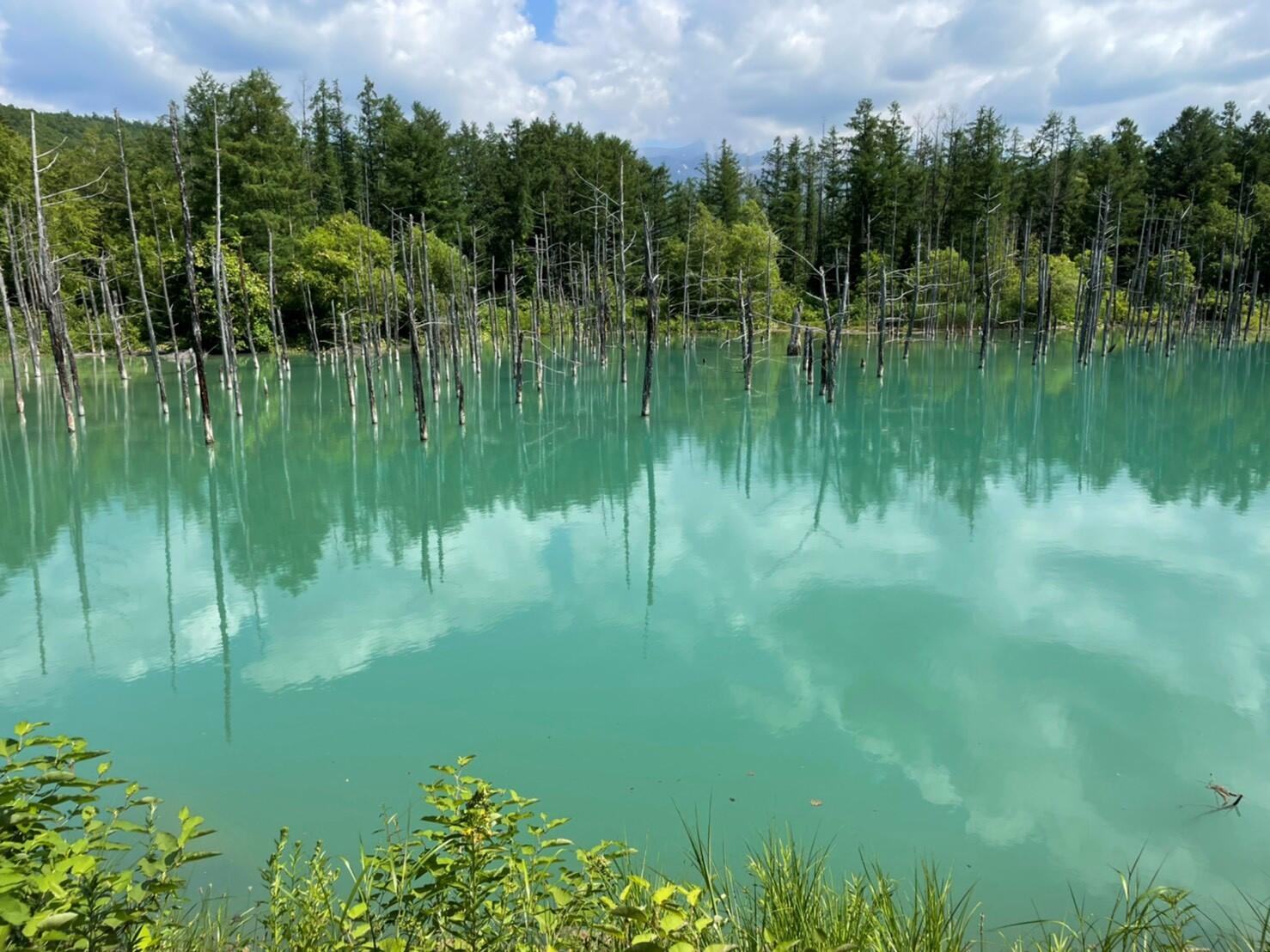 青い池①.jpg