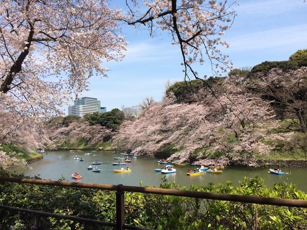 桜② 2017.jpg