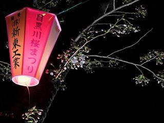 Sakura_1951_170327.jpg