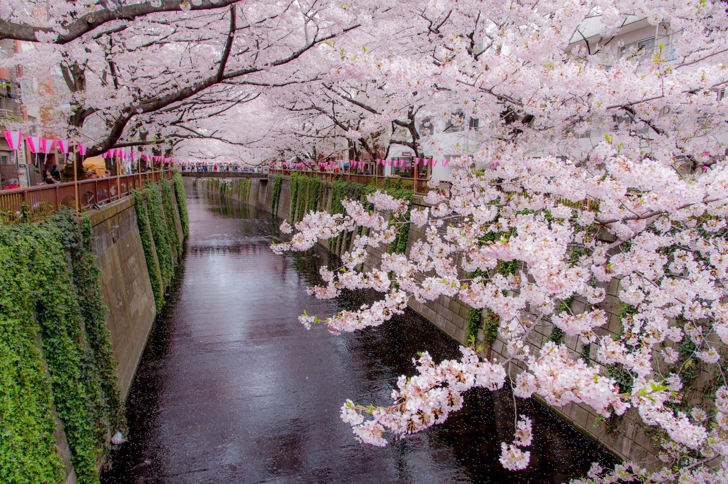 桜に.jpg